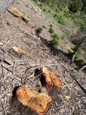 East Bay Parks clearcut