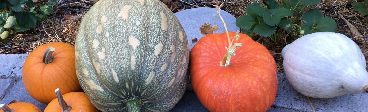 Celebrating the AutumnEquinox